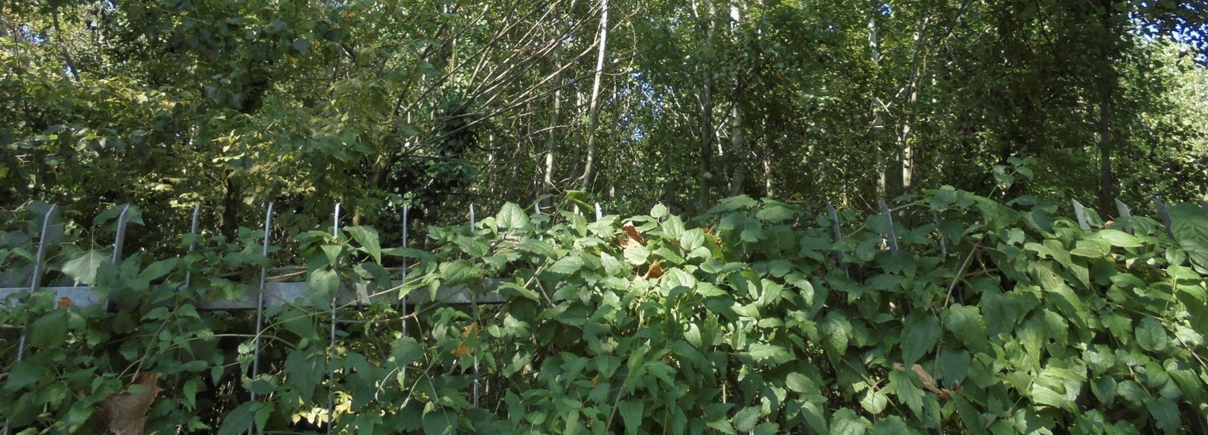 NO alla cessione dell'ultimo bosco spontaneo Rozzano e il circondario si mobilitano