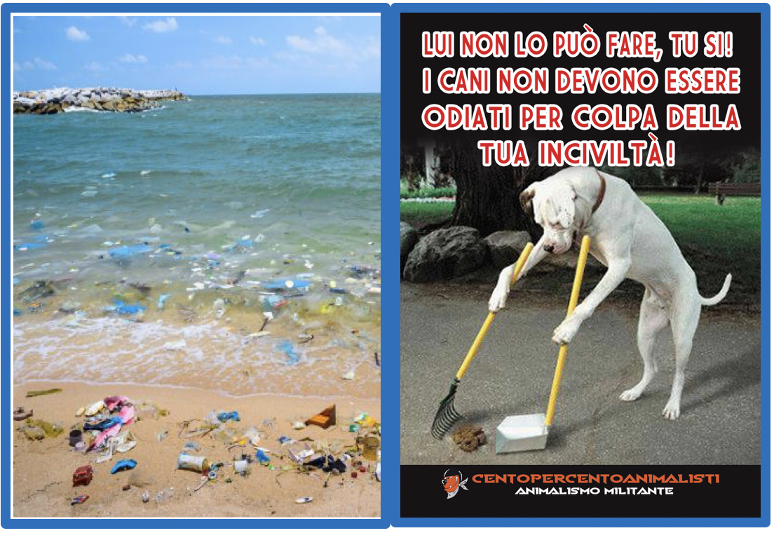Educazione spiaggia cani